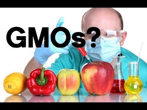 15 Harmful Effects Of Gmo Foods On Your Health Youtube Gmos