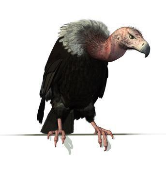 avvoltoi - Cerca con Google