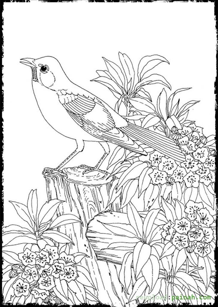 Advanced Coloring Pages for Adults Bird Cute colouring
