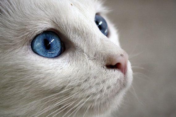 「貓」的圖片搜尋結果