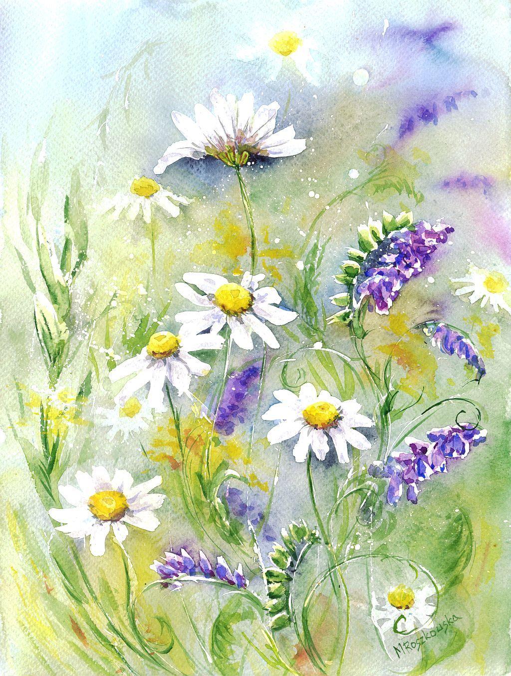 цветы ромашки картинки акварель поле
