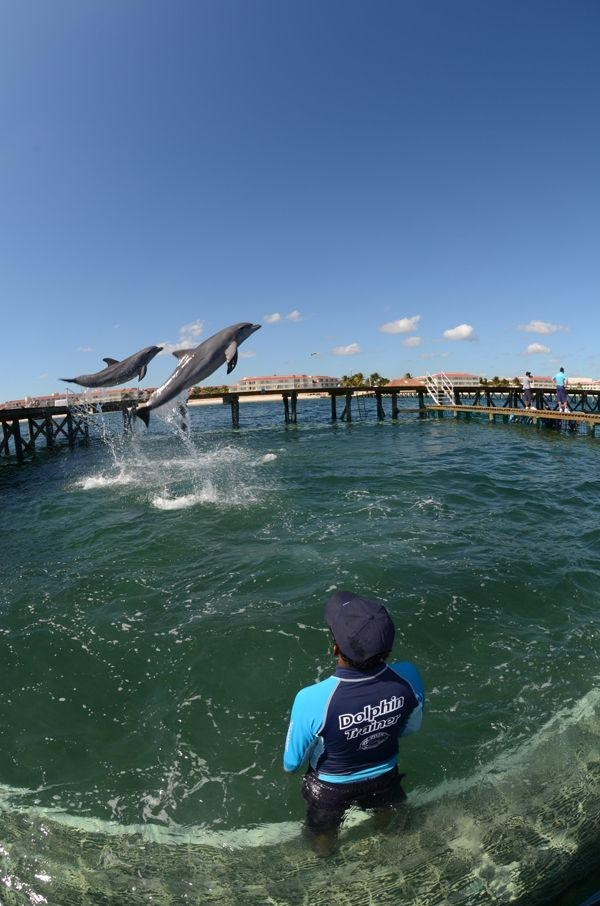 Dolphins flying high at Dolphin Discovery Riviera Cancun at Moon Palace
