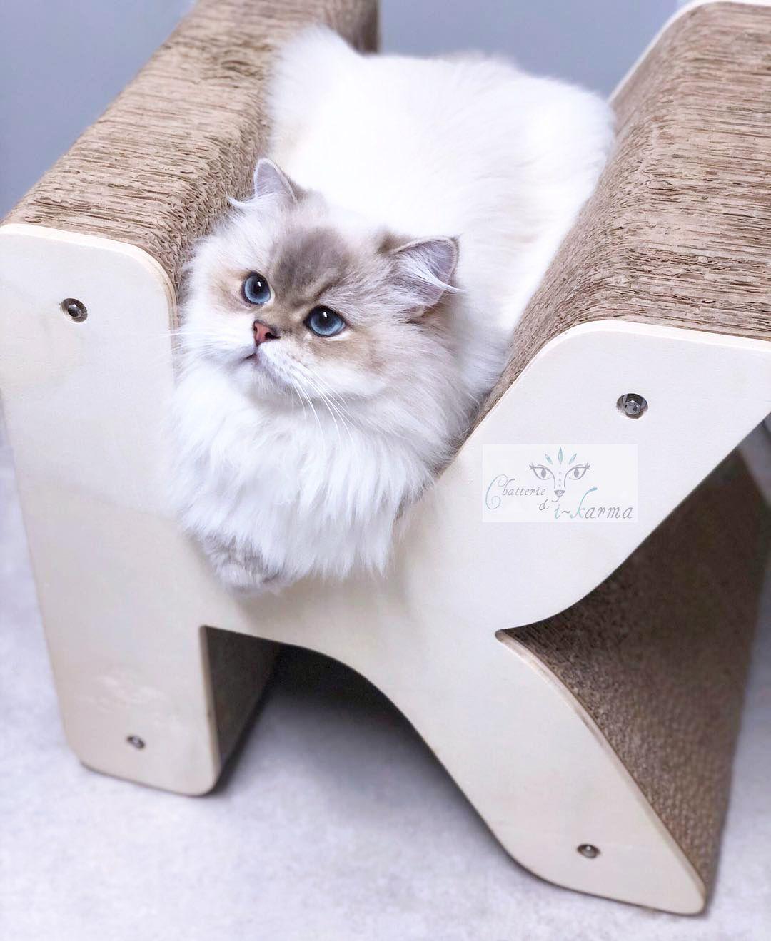 Griffoir Chat Carton Design Épinglé sur alphabet griffoir pour chat
