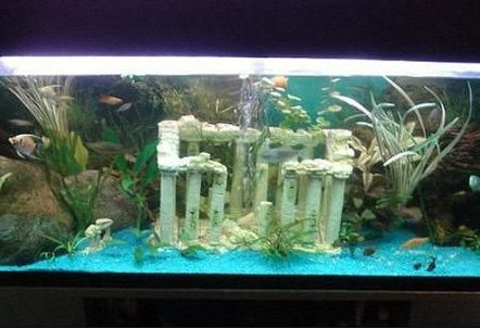 Freshwater Tanks Page 306 Fresh Water Tank Fish Tank Fresh Water Fish Tank