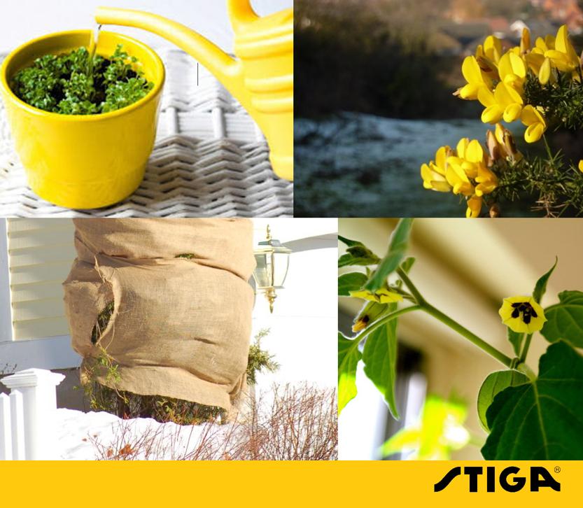 Zolang het niet vriest, kun je blijven planten om zo een beetje kleur in je tuin te brengen. Dek wintergevoelige planten af bij koud weer. Zet bloempotten binnen en vergeet niet om ze nu en dan water te geven.
