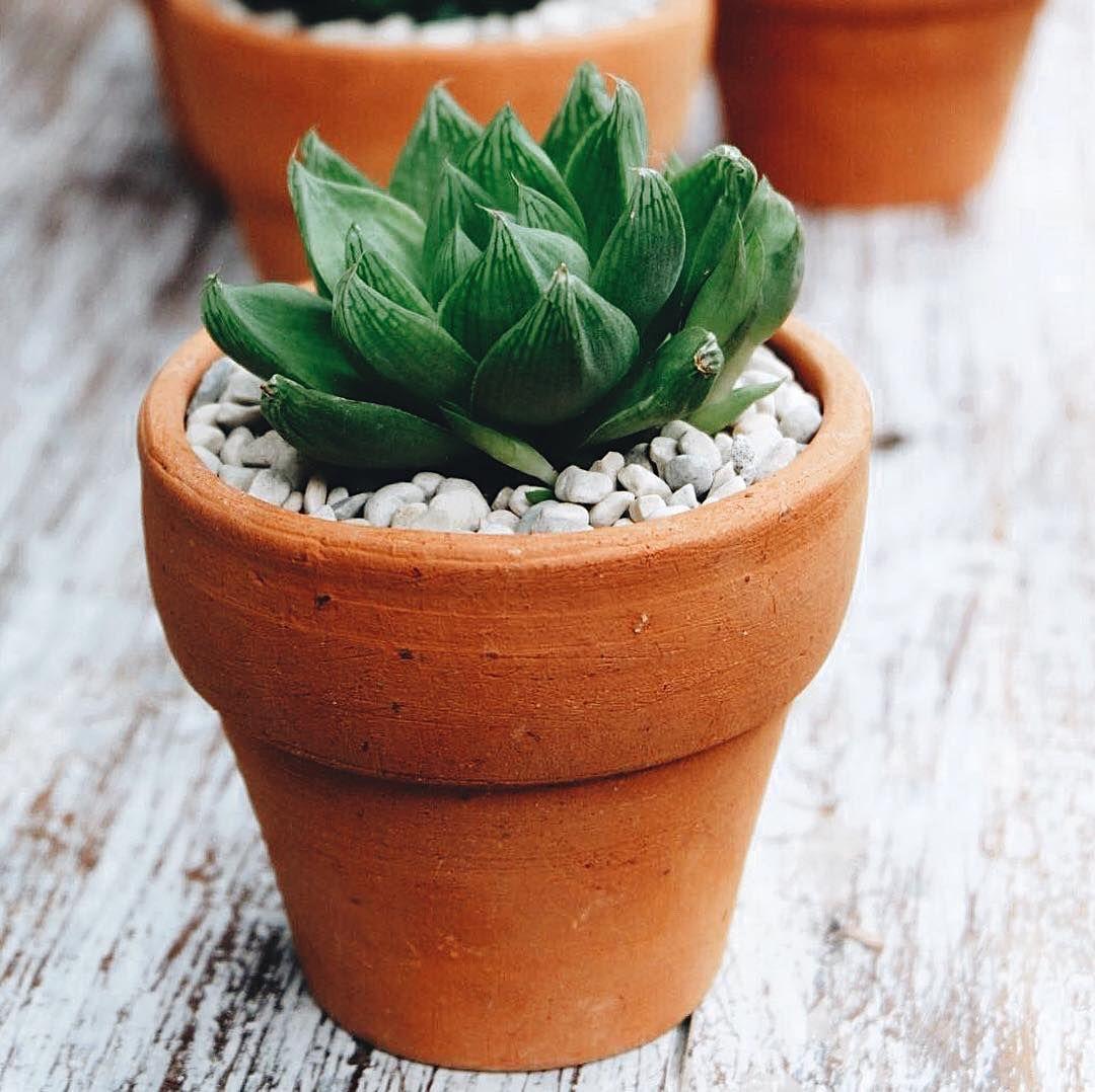 Cacti Succulent Terracotta Pots Baby Plants Baby Plants Pot