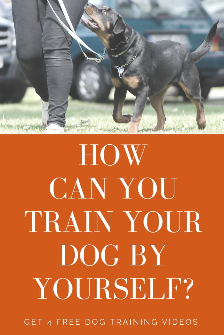 *LP 4 Free Dog Training Videos Dog training, Dog