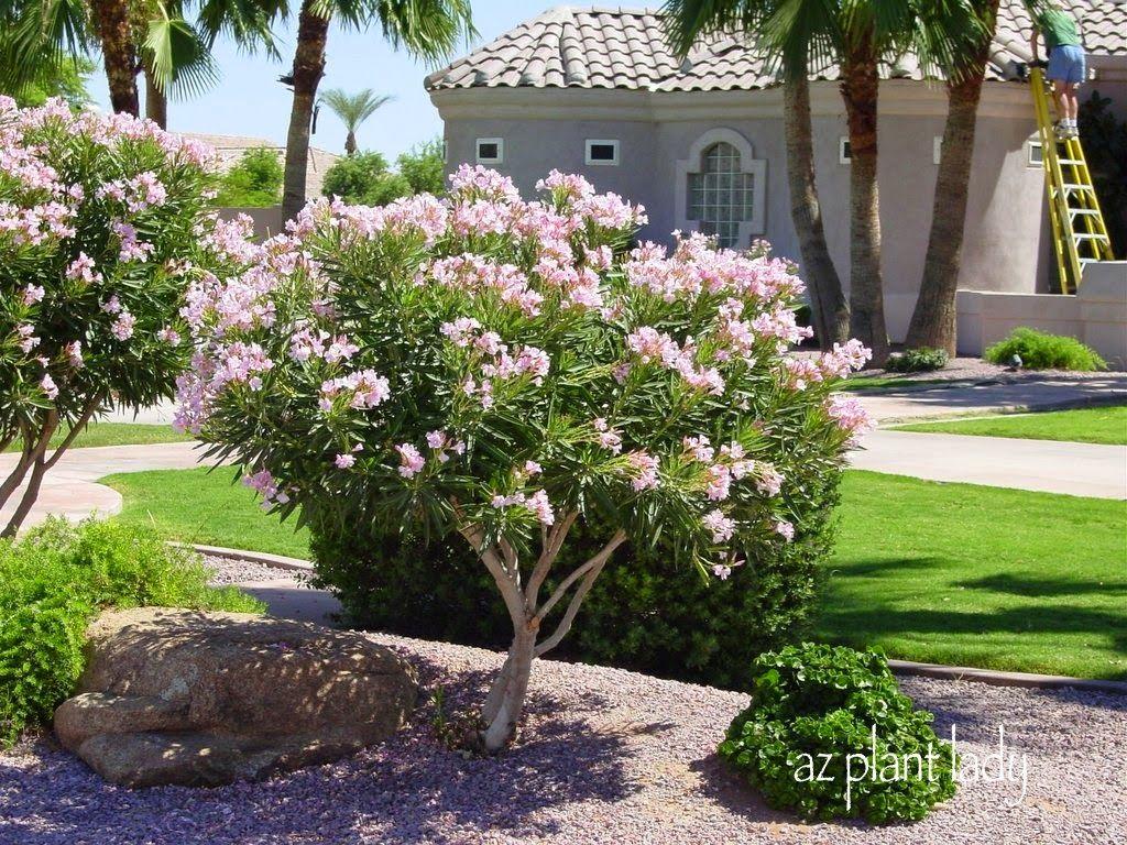 Ramblings From A Desert Garden Desert Landscaping Front Yard Landscaping Plant Diseases