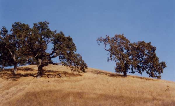 Geography of Oak Savannas in 2020 Landscape scenery