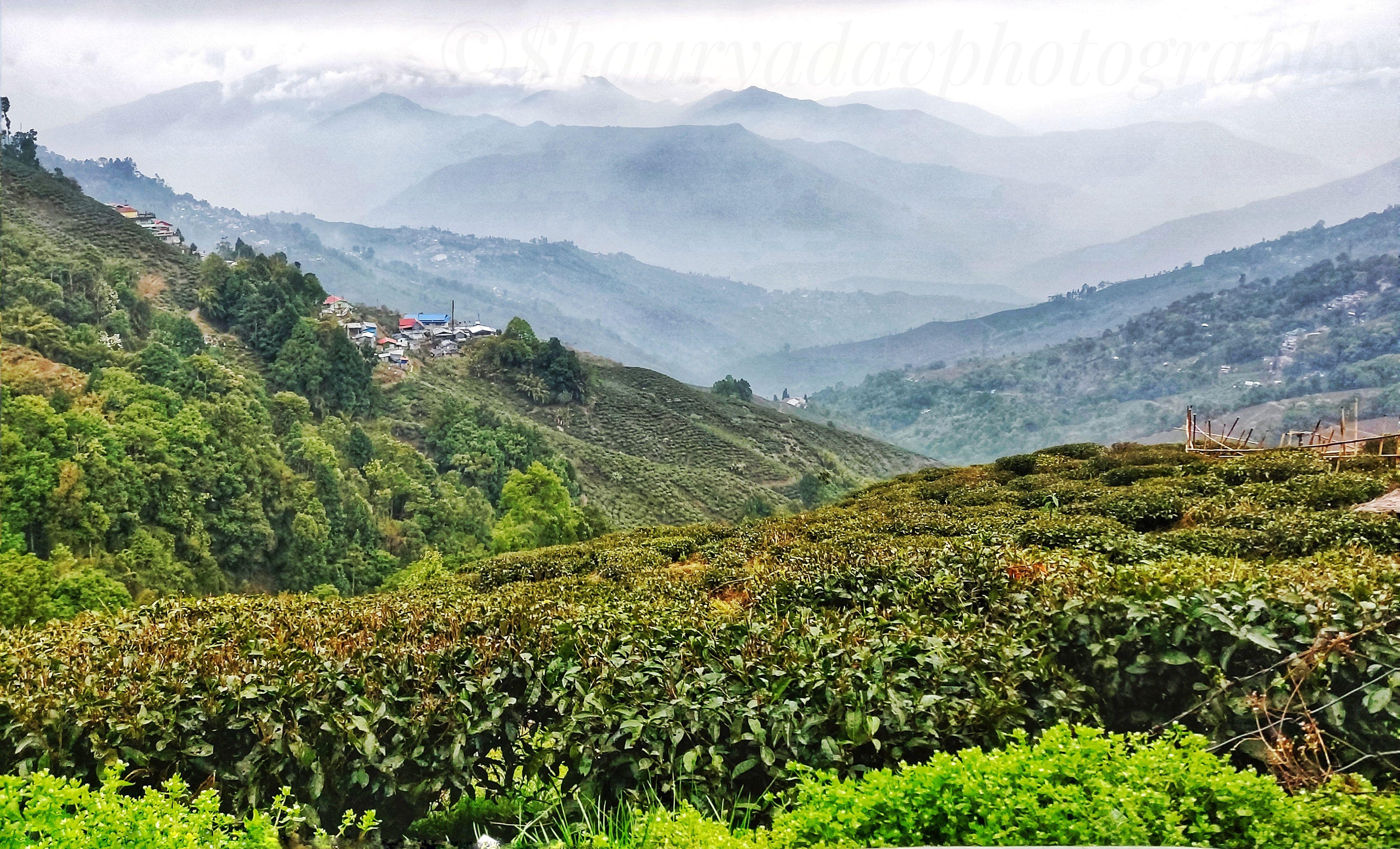 a683064739df177b1a970c5c8cb09d02 - List Of Tea Gardens In Darjeeling