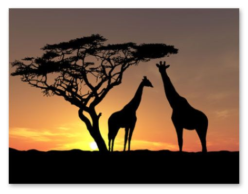 Lichtbronnen Je Hebt Verschillende Soorten Lichtbronnen O A Lampen De Zon De Maan Enz Op Dit Schilderij Wor Afrikaanse Zonsondergang Zonsondergangen Dieren