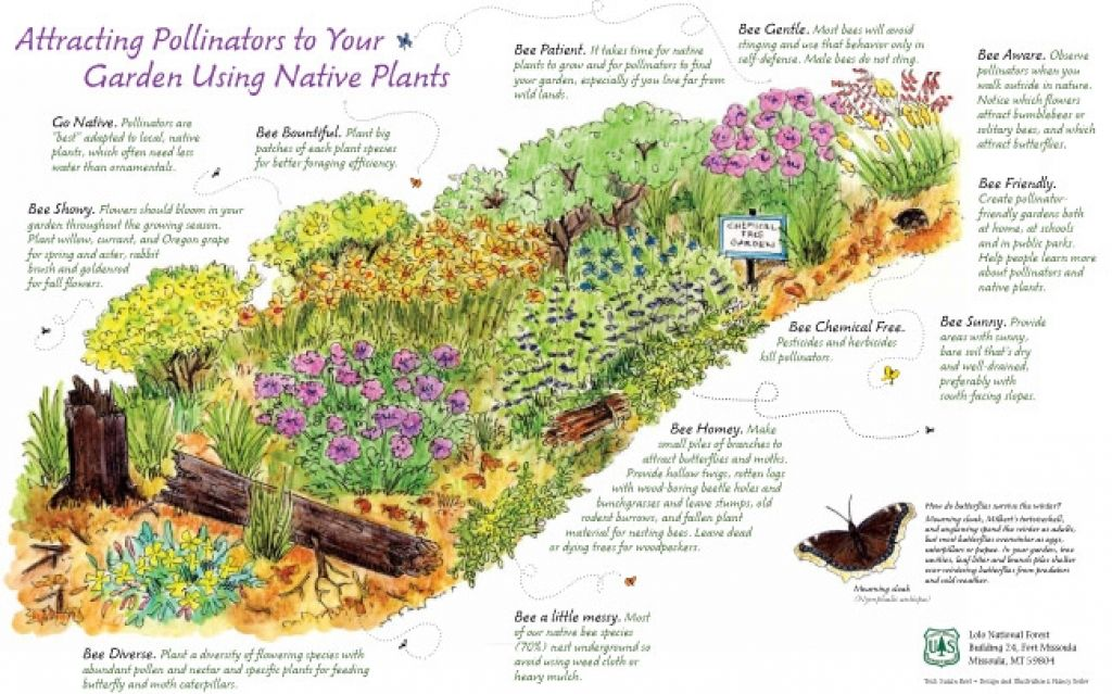 Native Plant Garden Design Pollinators Amp Native Plants Nancy Seiler  Concept
