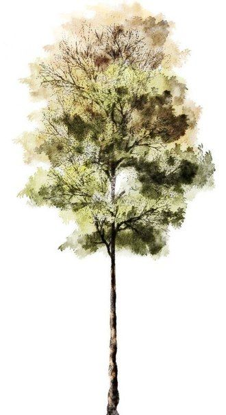 Pin By Amanda Wyrick On Renders Architectural Trees
