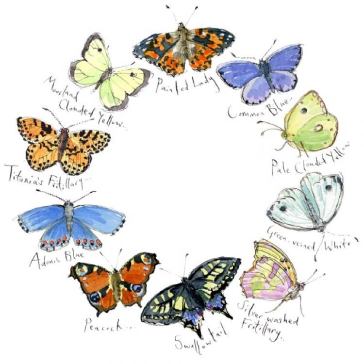 Butterflies II by Madeleine Floyd Signed limited edition Available from Artworx Gallery Shropshire UK. www.artworx.co.uk