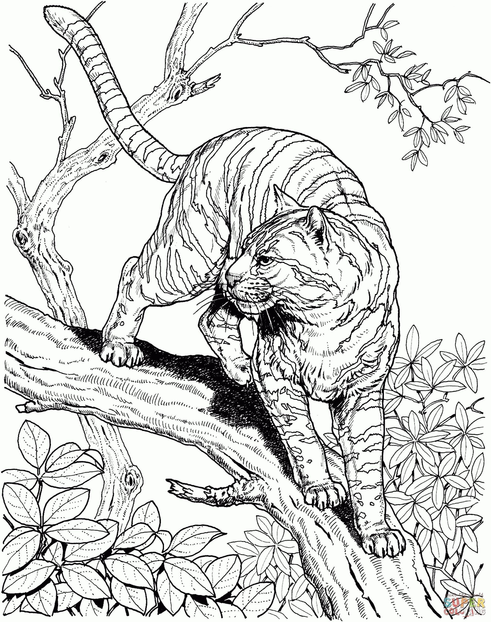 Realistic Animal Coloring Pages To Print Coloring Jungle