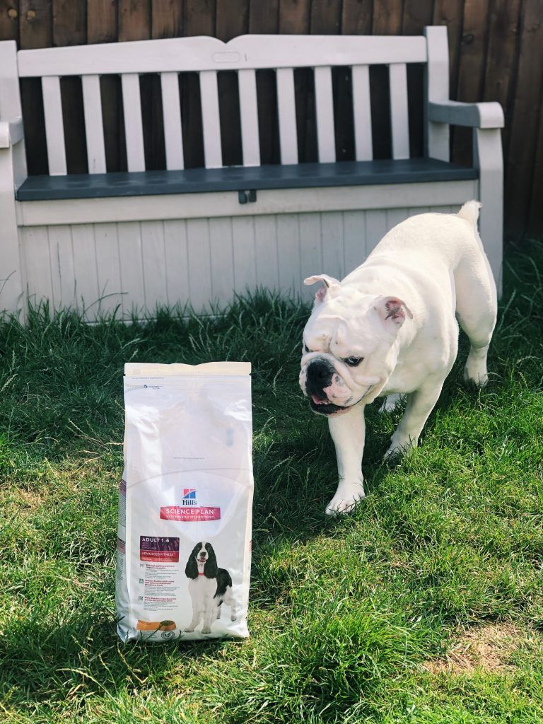 Hill S Dog Food Yummy Or Yucky Charlie S Review Keiran Crying Hills Dog Food