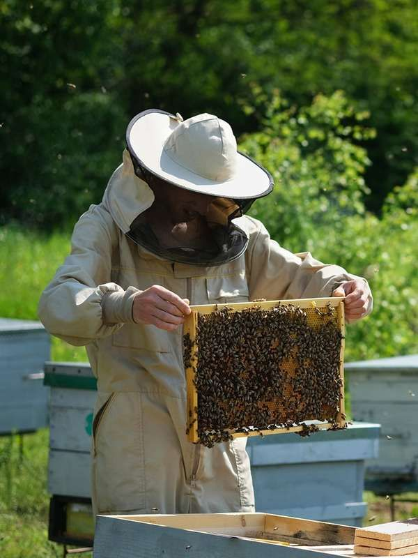Homemade Honey: How to Keep Bees in Your Own Backyard in ...