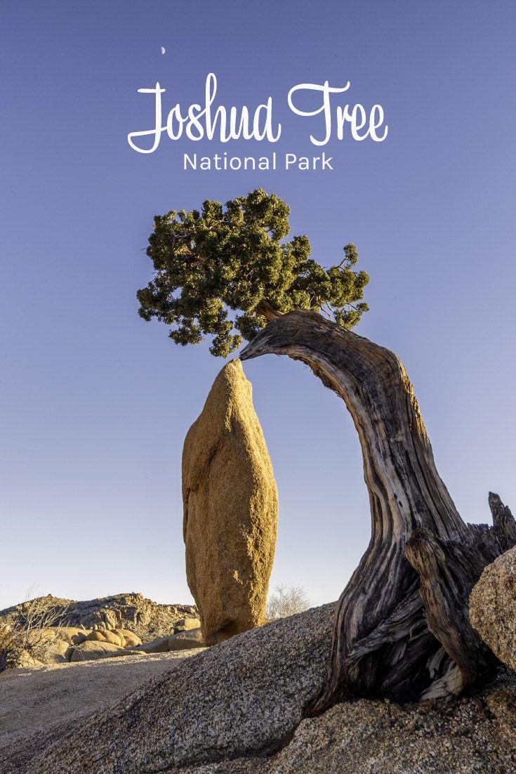 Joshua Tree National Park | Travel | United States ...