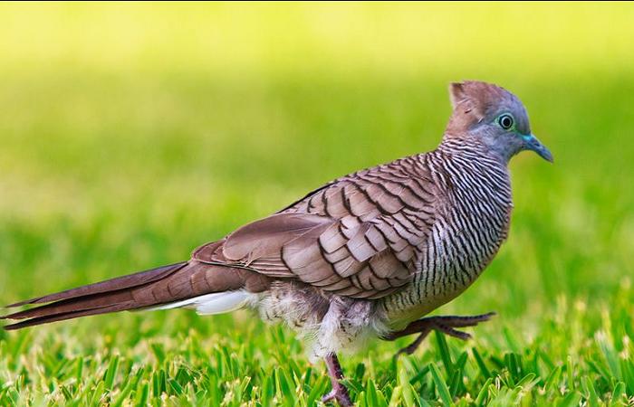 Pin Oleh Informasi Komunitas Kicau Mani Di Perawatan Burung Burung Gambar Burung Gambar