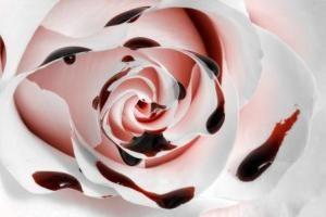 Pin Di Preserved Roses