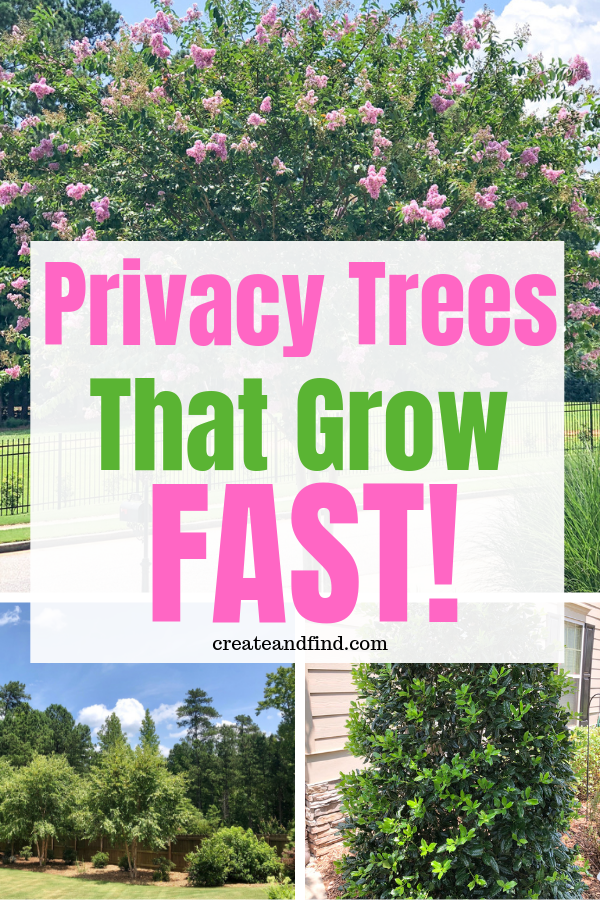 Fast Growing Privacy Trees Privacy Trees Trees For Front Yard