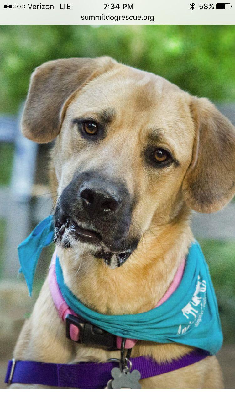 Adopt Lovable Lola on Dogs, Labrador retriever mix