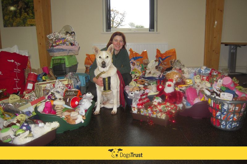 Dogs Trust Shrewsbury was bowled over this week by a