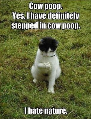 Funny Cat Meme With A Picture Of A Black And White Cat Sitting On