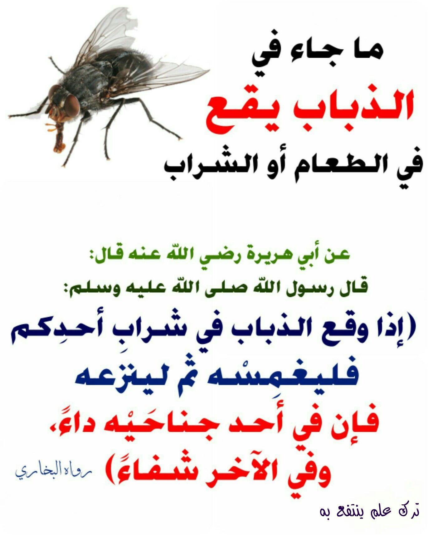 الذباب يقع في الطعام او الشراب Islam Facts Islam Facts