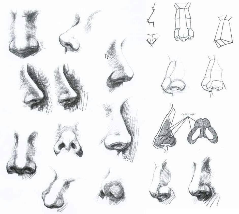 Anatomy Of Nose By Abed Ramadan Sketch Picture Album Drawings