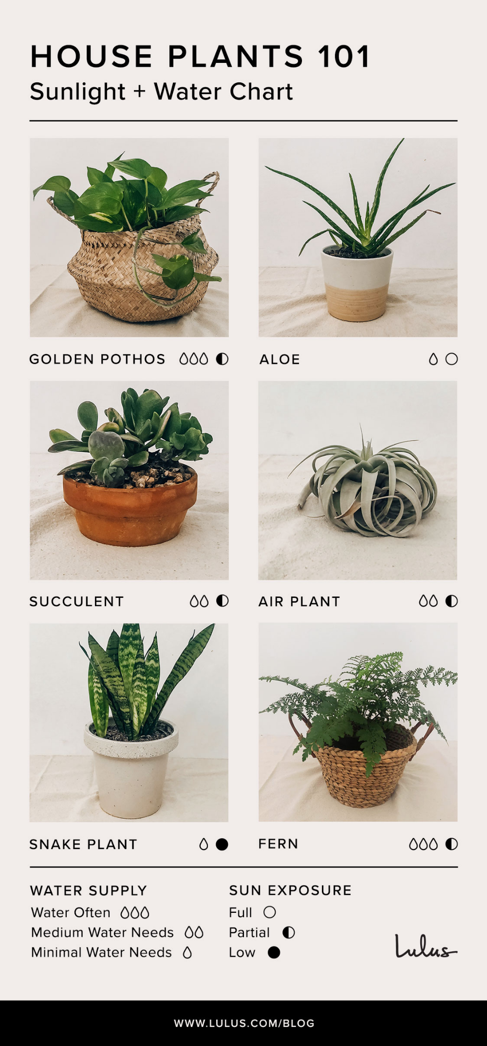 Indoor House Plants 101: Your Ultimate Easy Care Guide to Plant Parenting