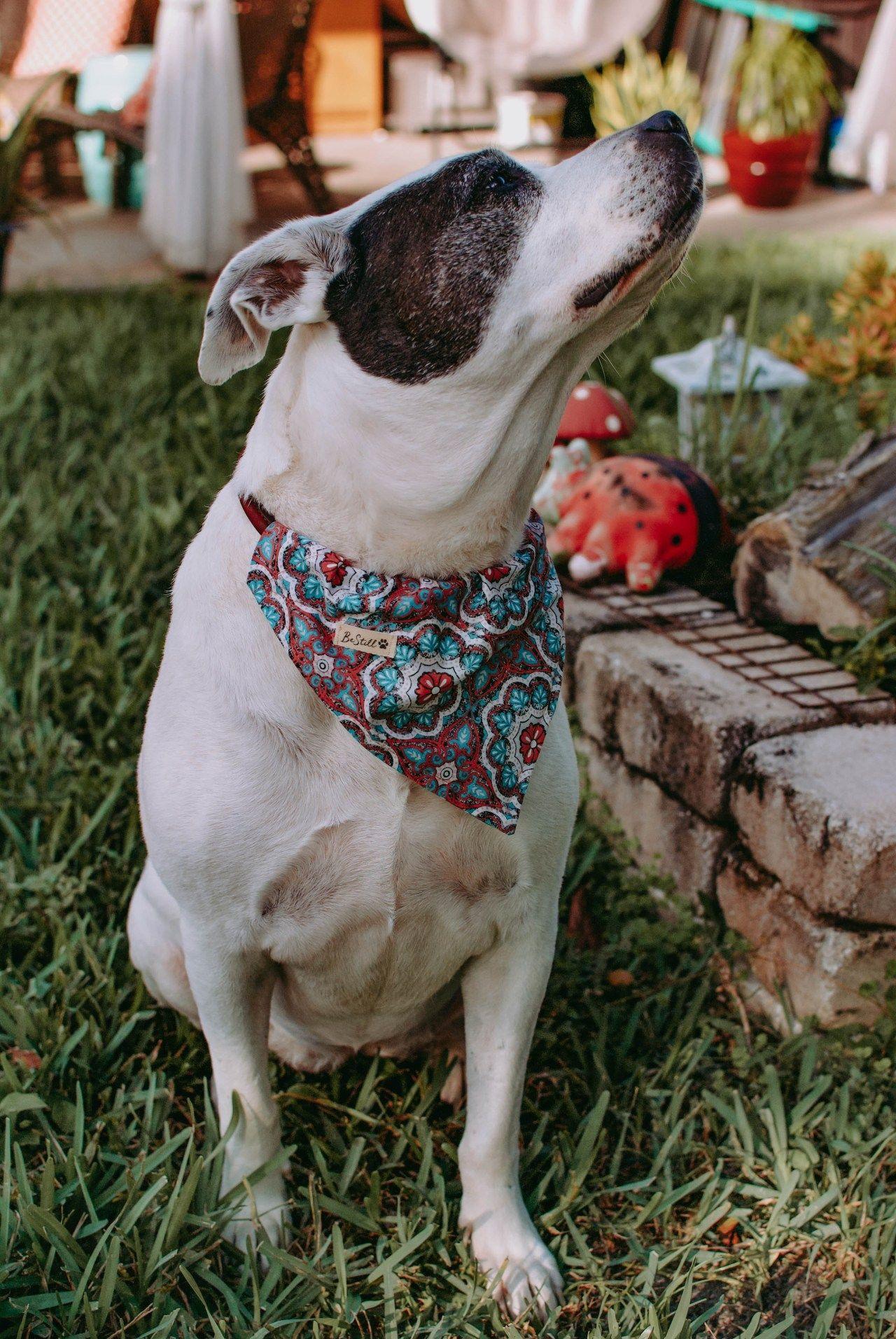 Easy sew dog bandana tutorial organized chaos dog blog