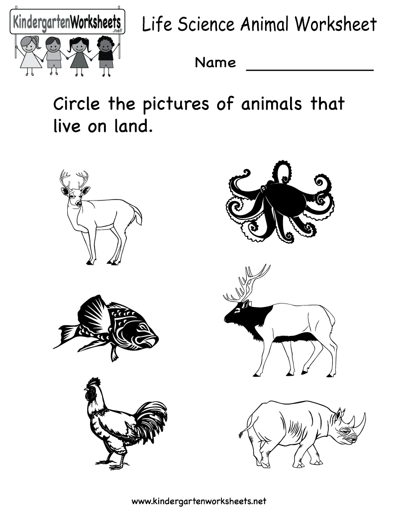 Worksheets Preschool Science Worksheets science printables for kids life animal worksheet free kindergarten learning worksheet