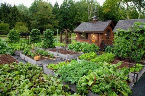 Veggie garden | Backyard greenhouse, Sustainable garden ...