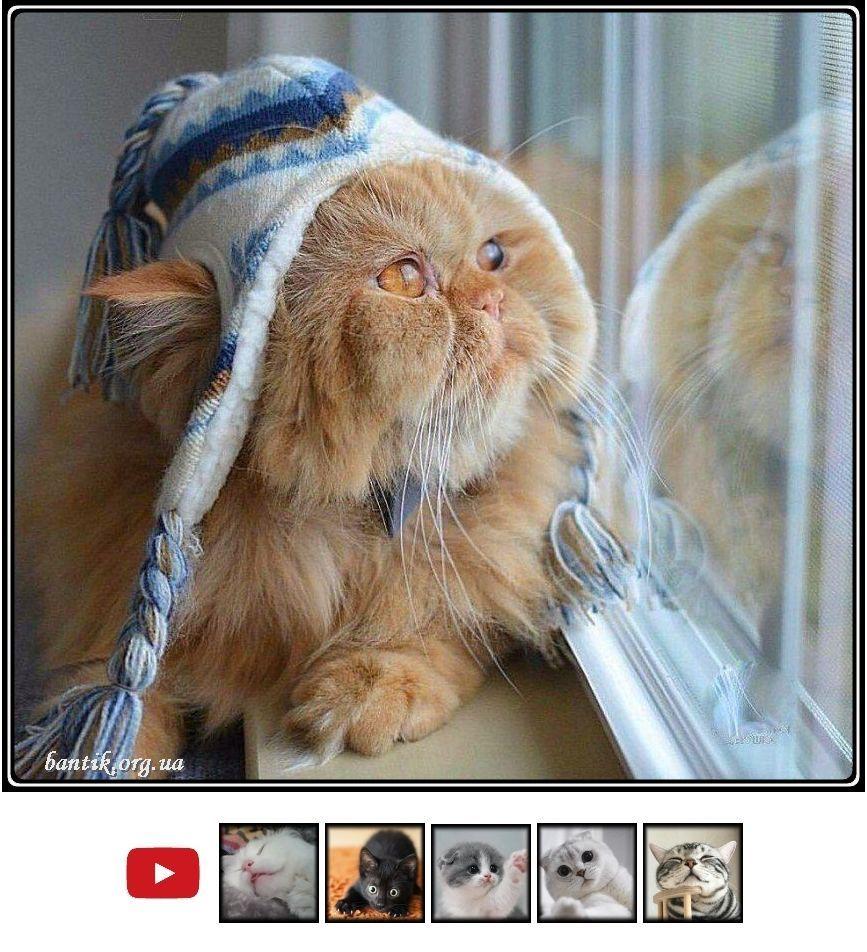 Смешные кошечки и забавные коты фото | 4 cats drop in ...