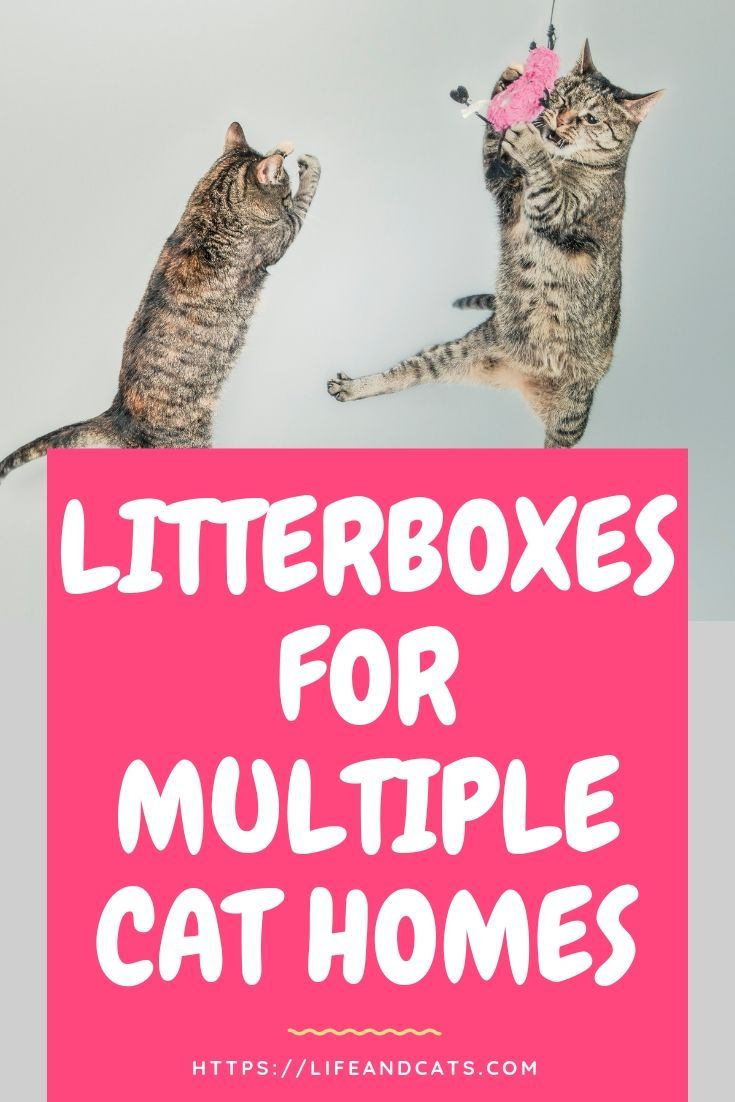 Best litter box solutions for multiple cat families cats