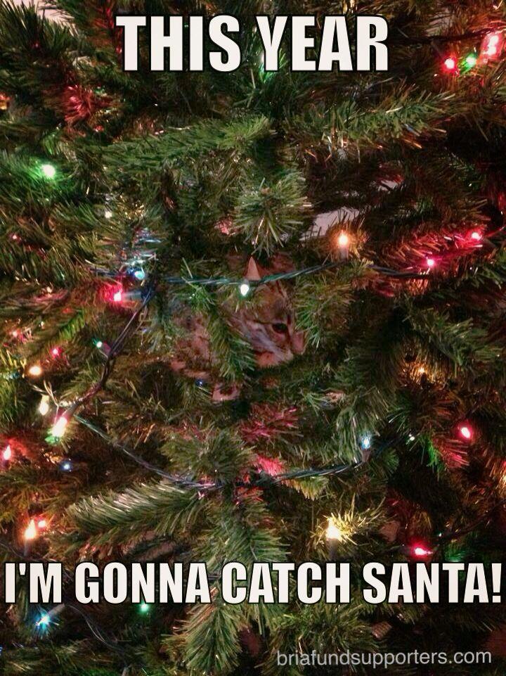 CatShaming Christmas Tree Kitty Cat Christmas cats, Cat