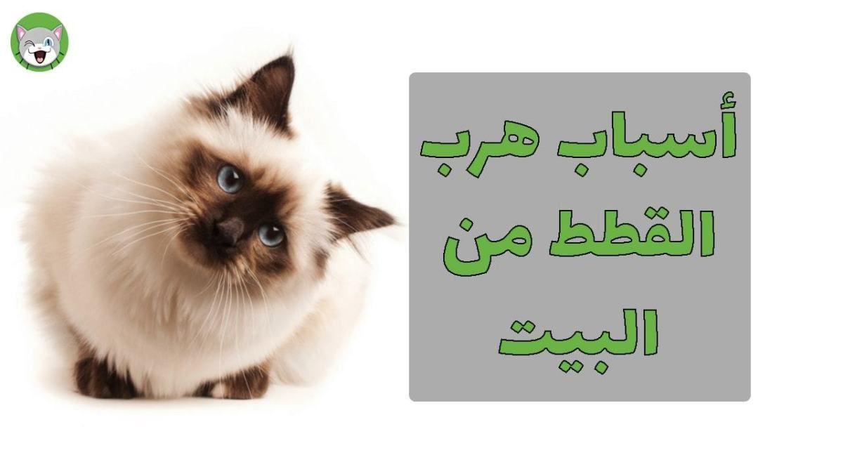 أسباب هروب القطط من المنزل التي يجب أن تتعرفوا عليها عشاق القطط حول العالم