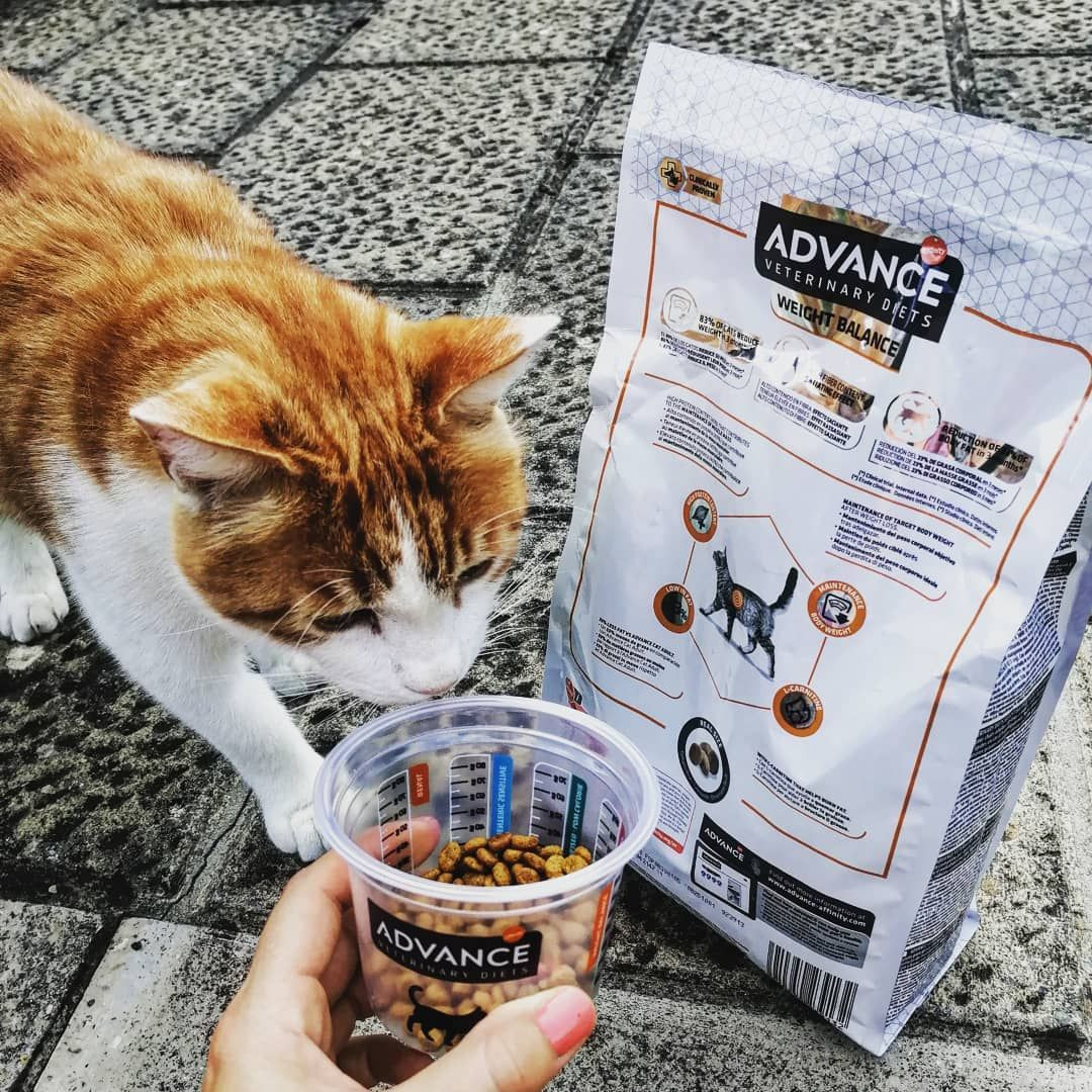 Spritzi E La Sua Dose Di Croccantini Challengeadvance Advance Petsfood Animalfood Cats Catfood Foodcat Cat Gatto Gattibelli Advan Cat Food Veterinary