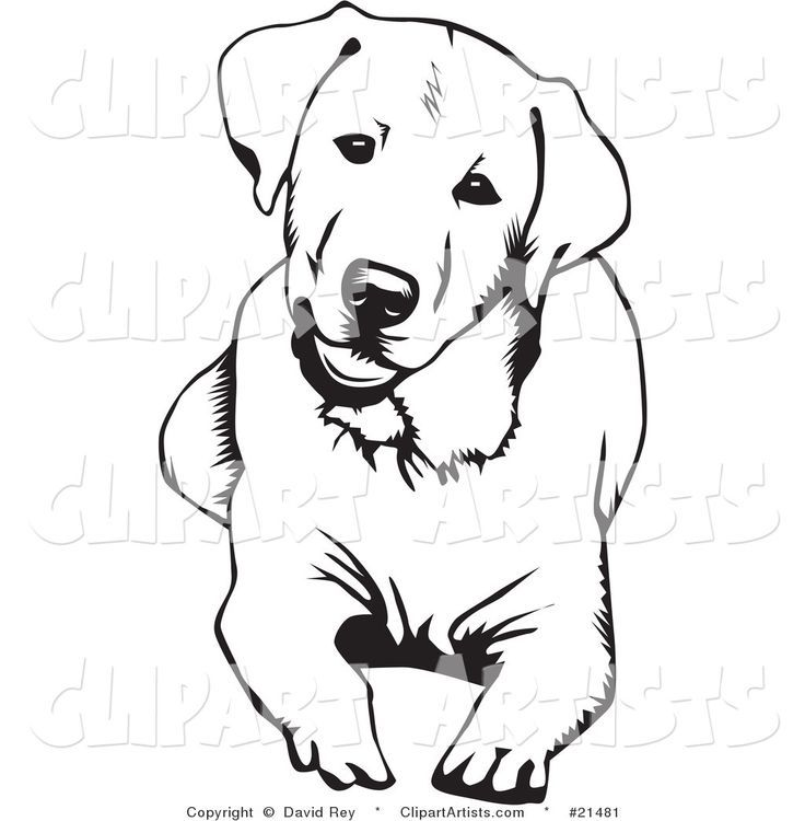 Labrador Retriever Dog For Coloring Page