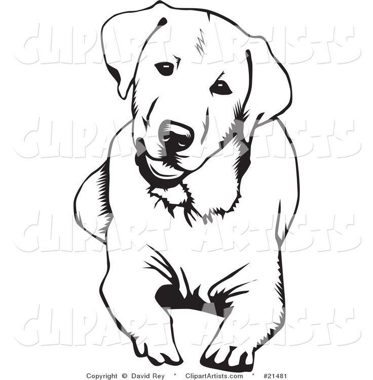 labrador retriever dog for coloring page