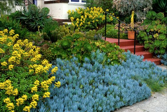 In A Small Urban Front Yard A Slope Of Succulents Including - Urban front yard landscaping ideas