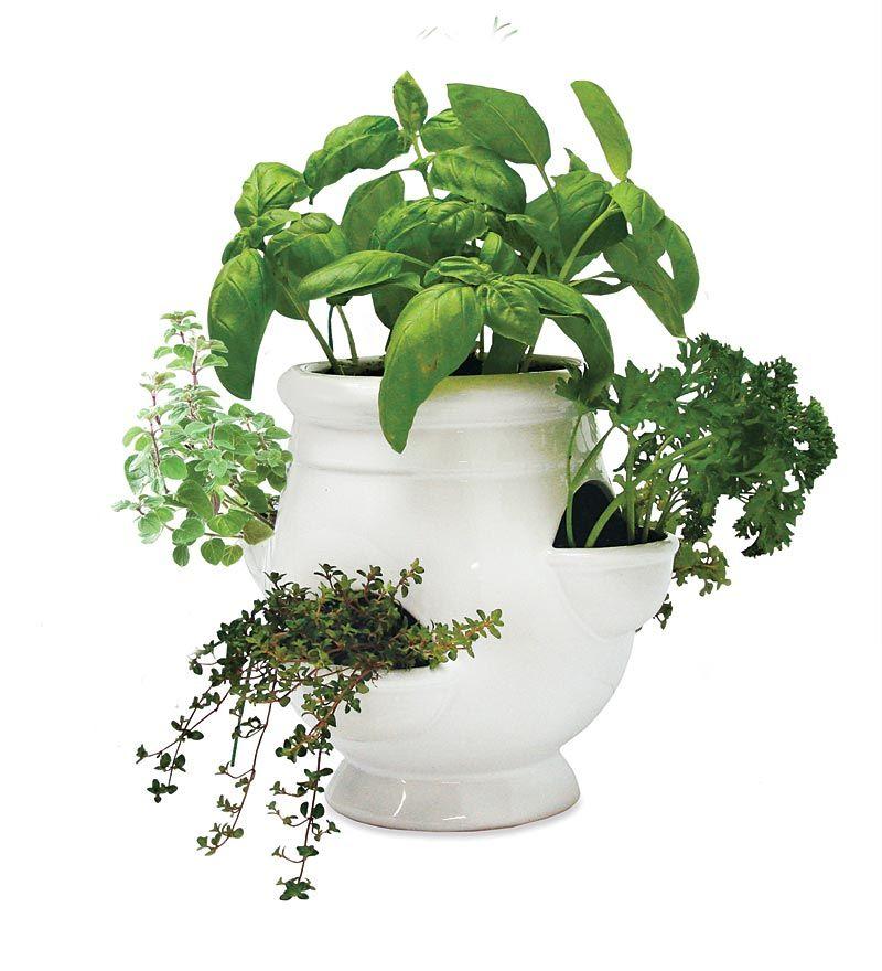 Outdoor Herb Garden Kit.Windowsill Herb Garden Kit Any Outdoor Lover Gardener Or