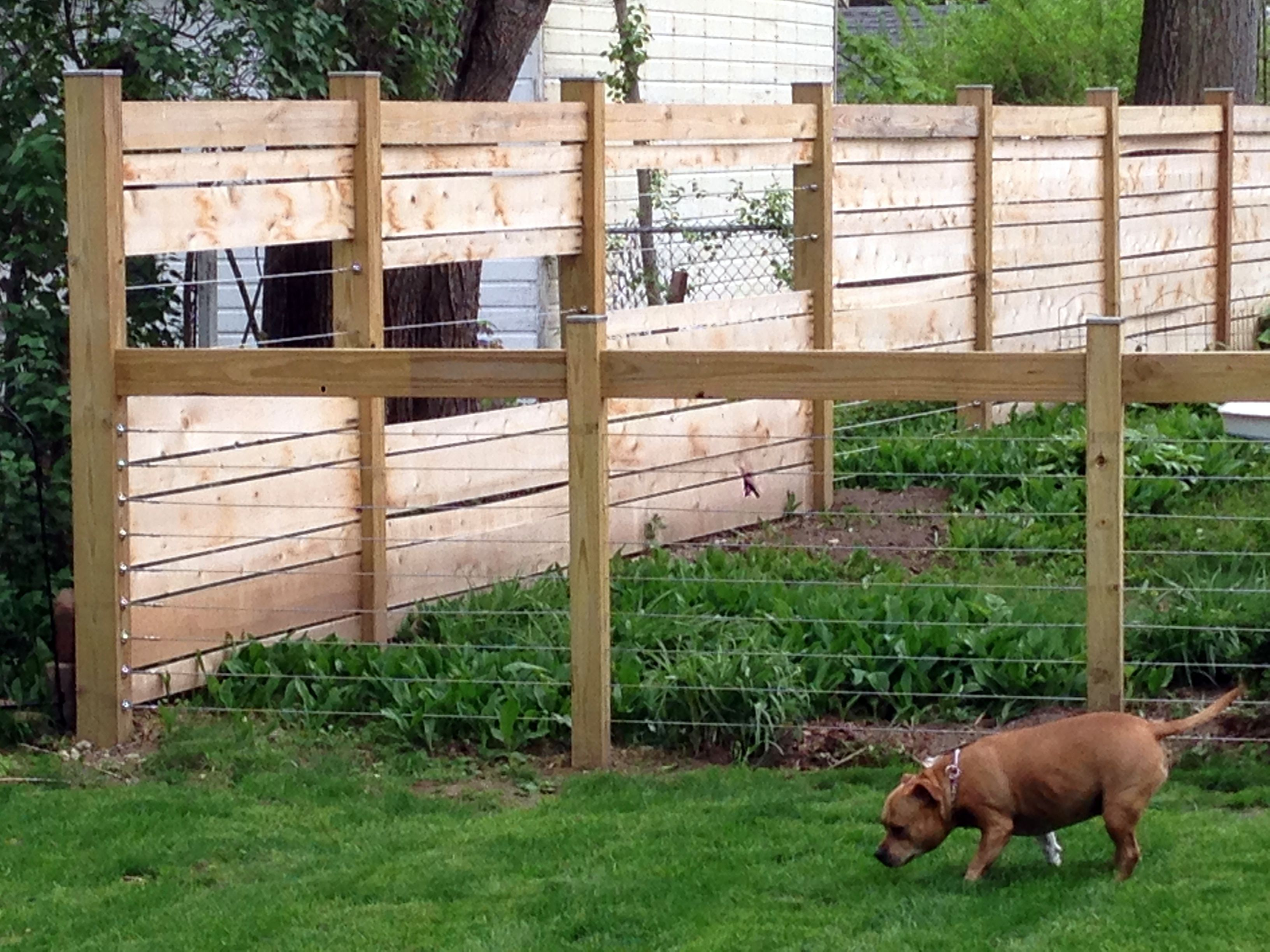 Keep Your Dog Away From Your Lovely Backyard Garden With