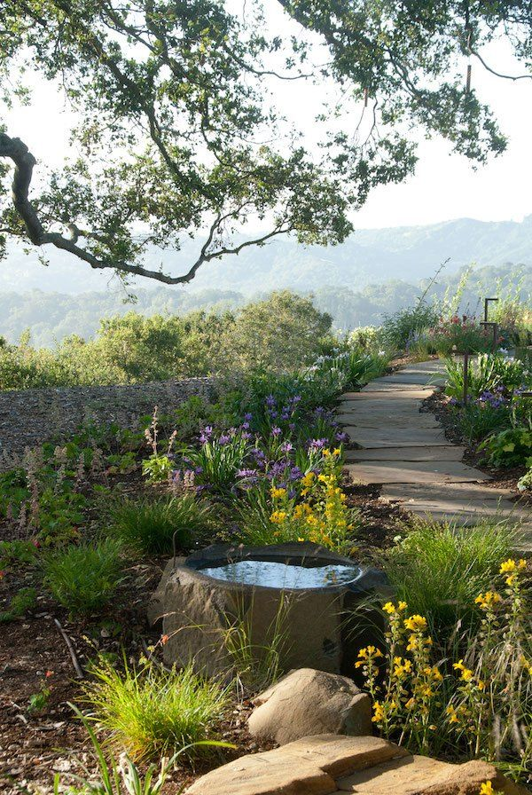 stepping stones native plants