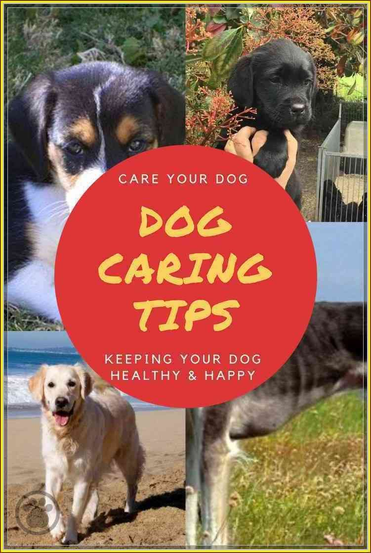 Make Sure Your Pet Has Time Each Day To Stretch His Legs And Move Around Look Into The Image By Visiting The Link Dogcar Dog Care Dog Flea Treatment Dogs