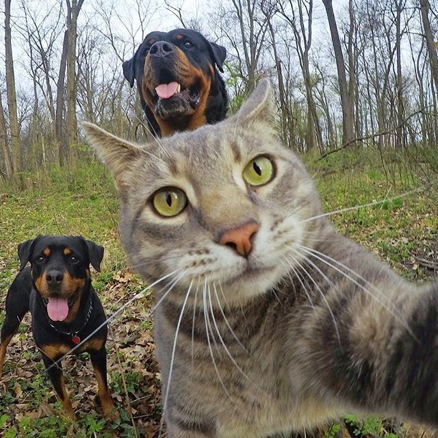 yoremahm nature selfie 2017/04/20 035150 ペット用品, キュートな