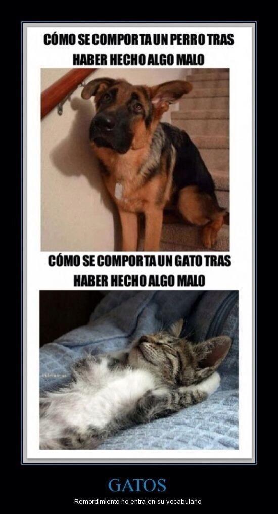 Comportamiento Gatuno Perros Graciosos Perros Y Gatos Graciosos Perros