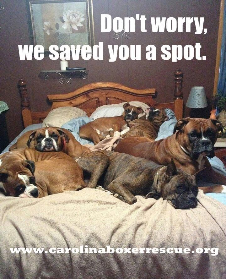 Don't Worry... We Saved You A Spot ;) #boxerfunny