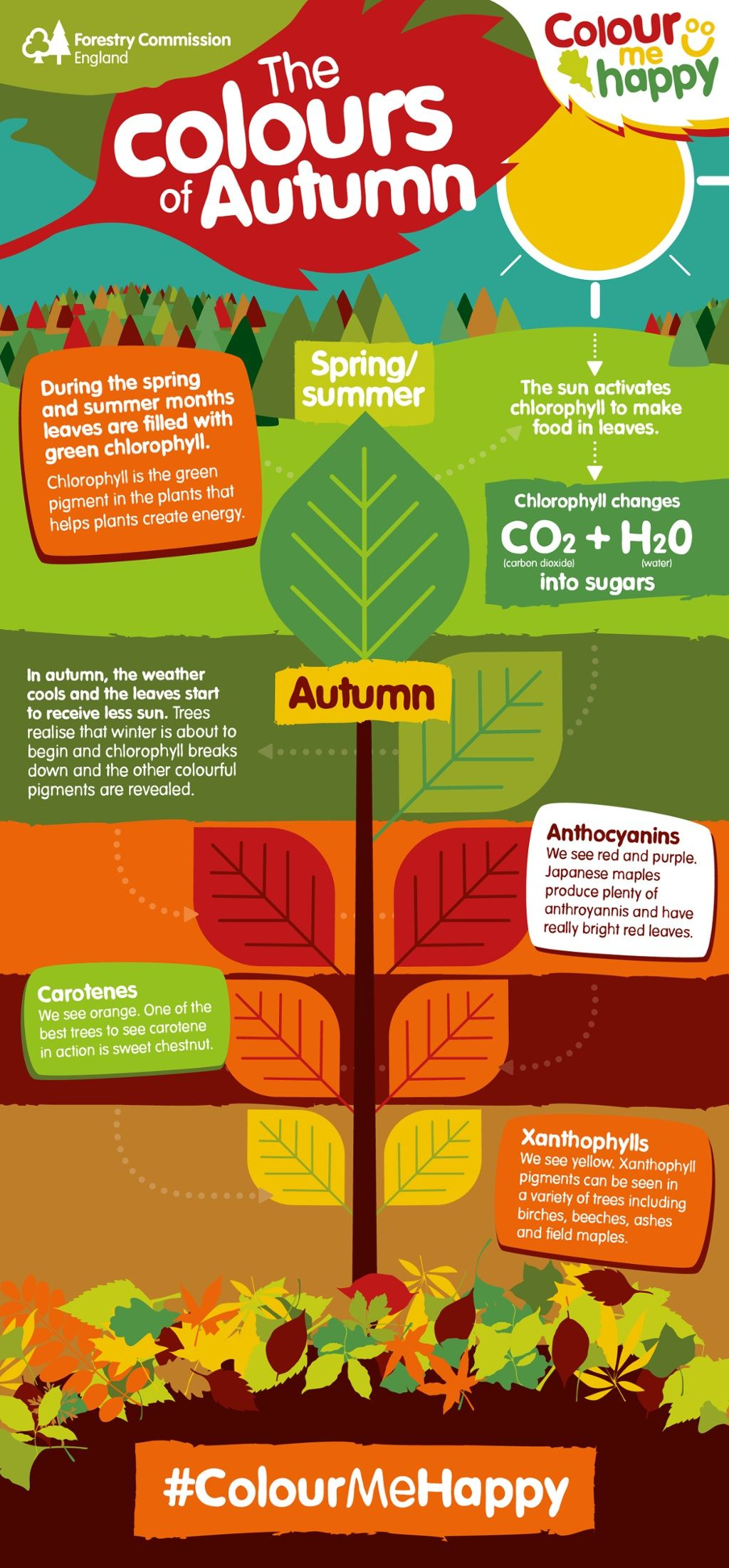 Touch This Image Why Do Autumn Leaves Change Colour By